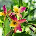 Orchideenwelt in der Biosphäre Potsdam + Verlosung