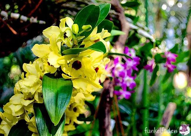 Orchideen in der Biosphäre Potsdam