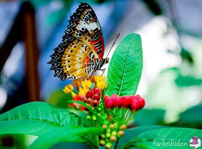 Biosphäre Potsdam - Schmetterling