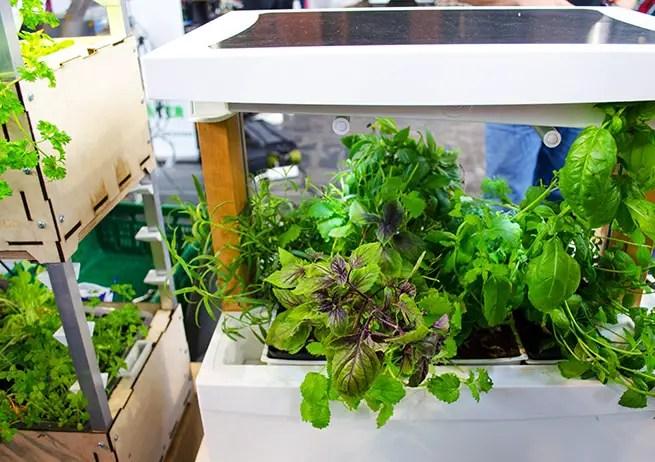 Mini Garten für Zuhause