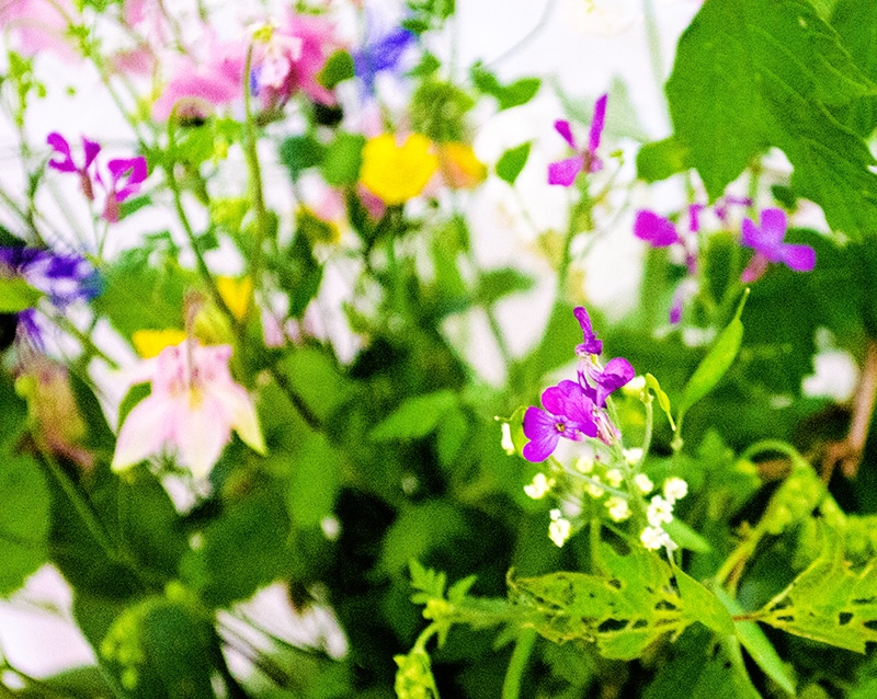 Bunte Blumen im Wohnzimmer