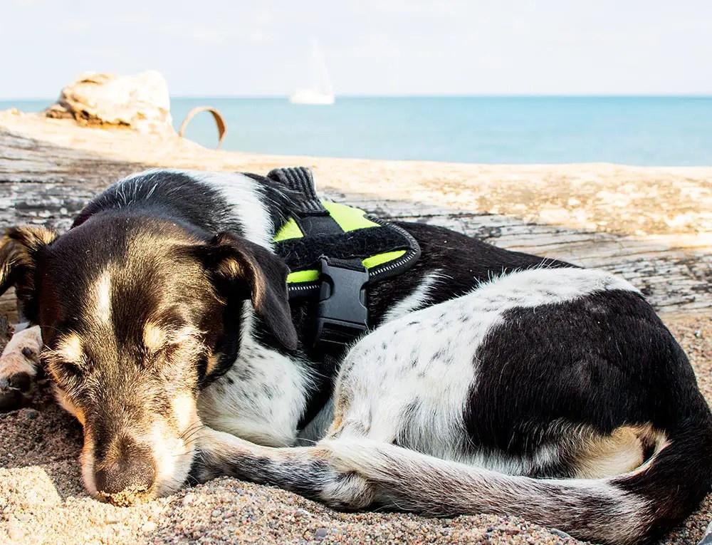 Hund auf Rügen