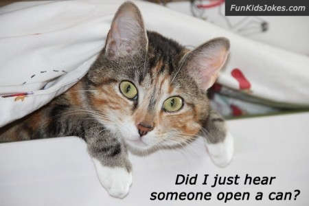 cat-open-can-joke