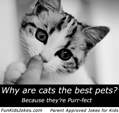 Cat Jokes For Kids And Parents