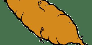 Sweet Potato Jokes and Jokes about Yams