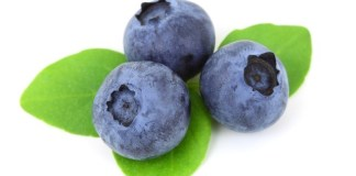 Blueberry Jokes - Jokes about Blueberries