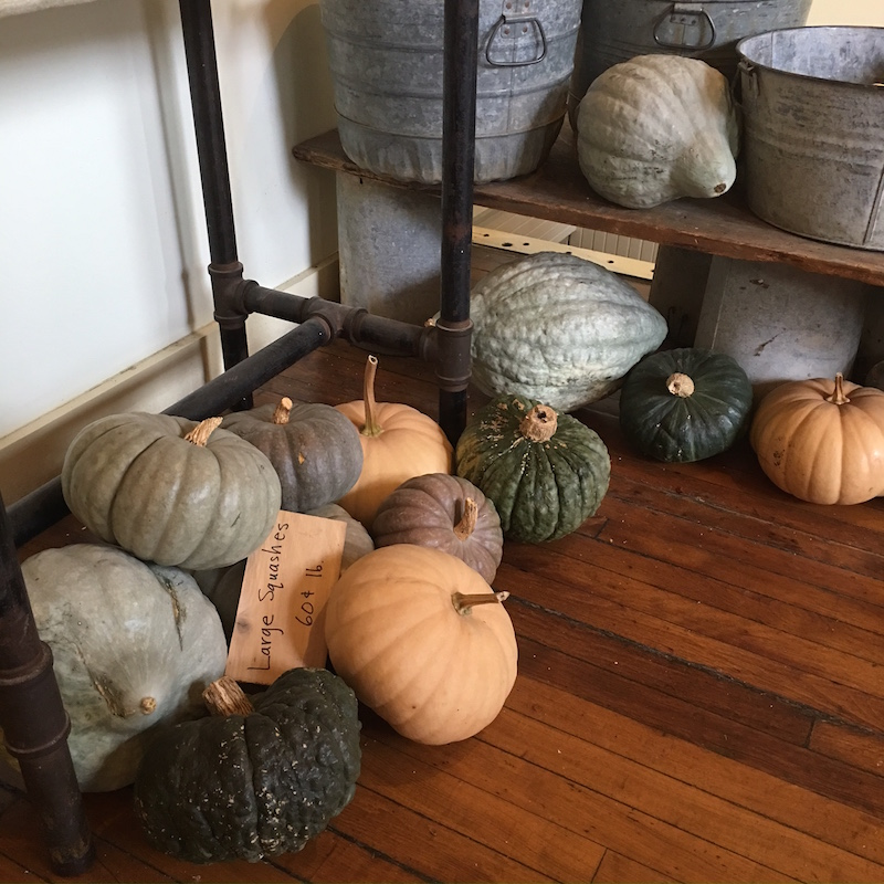 fall-squash-colors