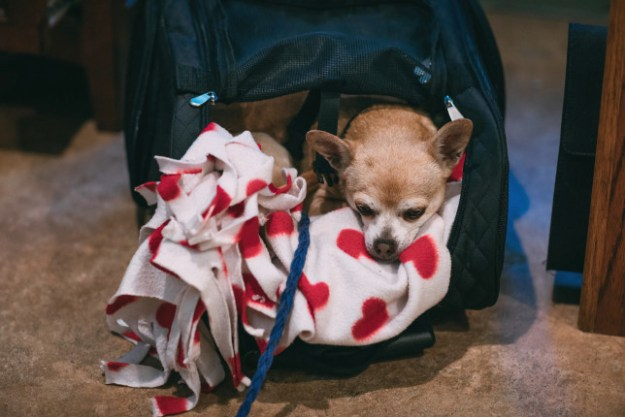 Pita made herself comfy while we were getting ready for our wedding. (Photo by Wild About You Photography)