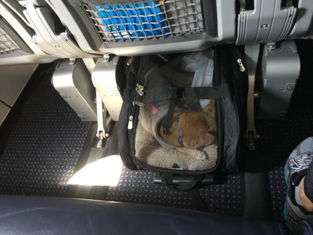 the best travel pet carrier ever -- Under the middle seat.