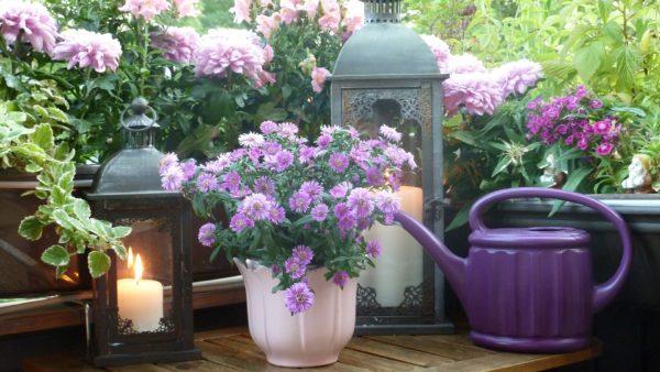 Balcony Flowers and Greenery