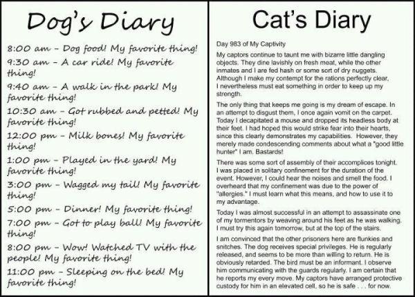 Dog Cat Diary