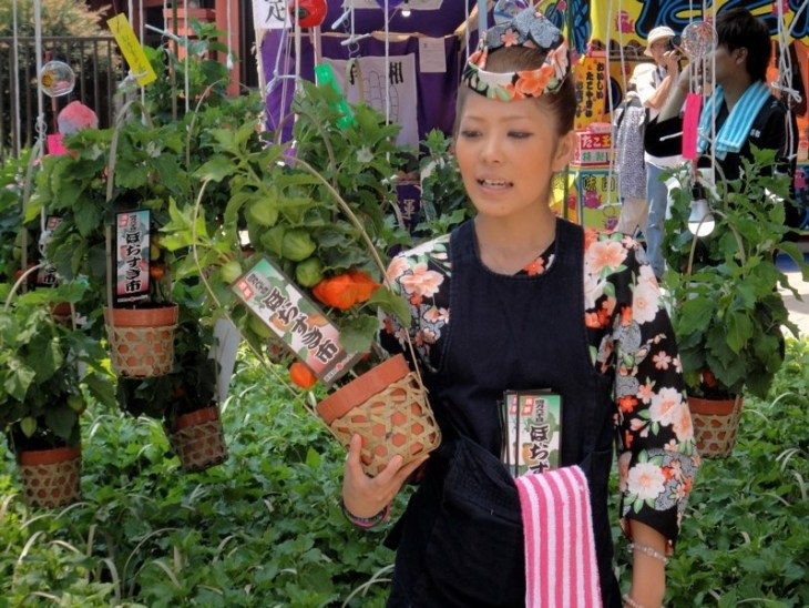 Young woman selling hozuki lantern plant at Asakusa Hozuki Ichi