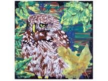 Pernambuco Pygmy Owl8 x 8 inches