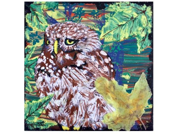Pernambuco Pygmy Owl