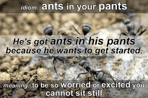 ants in your pants idiom