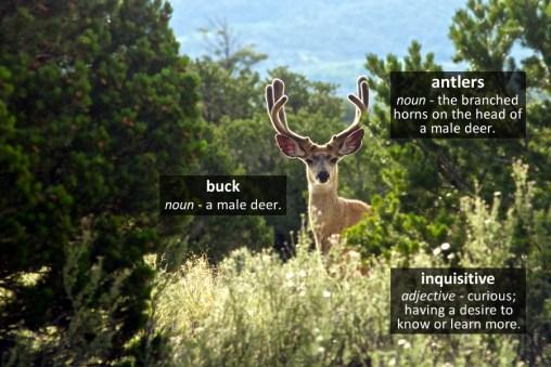 deer vocabulary