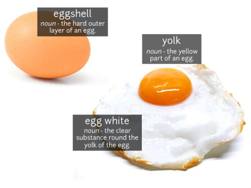 egg vocabulary