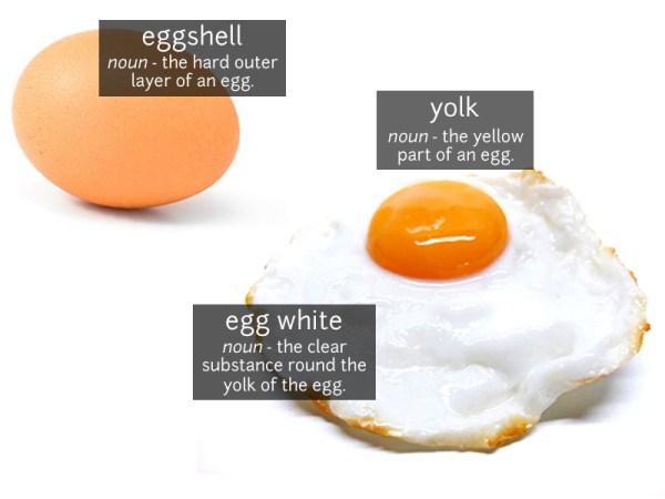 egg vocabulary