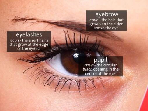 eye vocabulary