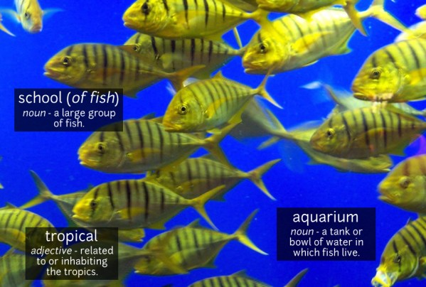 fish vocabulary