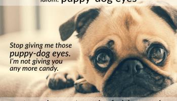idiom puppy-dog eyes