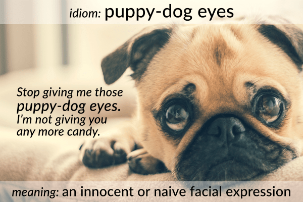 idiom puppy-dog eyes