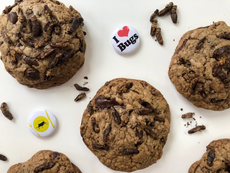 Cricket Cookies 2