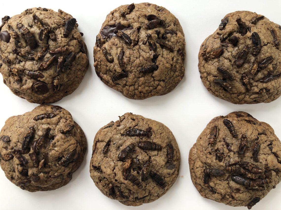 Cricket Cookies 3