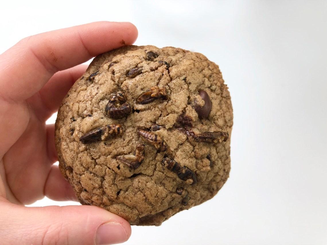 Cricket Cookies 5