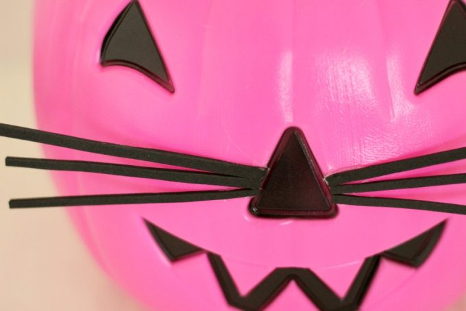 whiskers-2