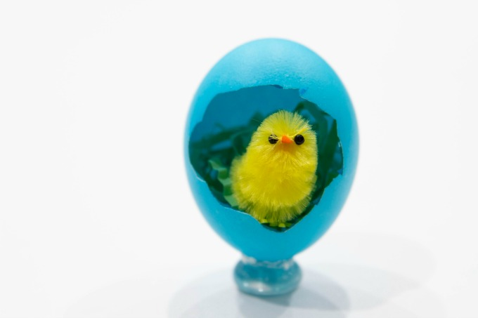 Easter chick in shell