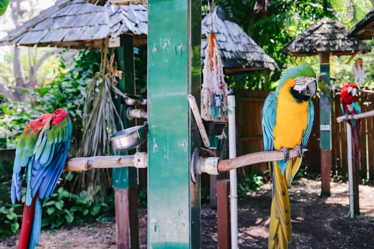 Parrots at Sarasota's Jungle Gardens