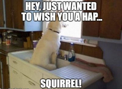 20 Funny Birthday Wishes For Dog Lovers Funny Birthday Wishes