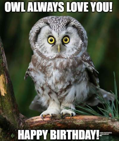 Owl Always Love You Happy Birthday 1 Funny Birthday Wishes