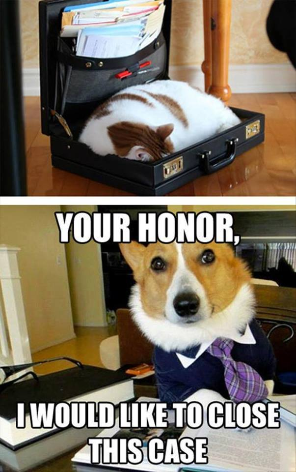 Your Honor Funny Pictures Quotes Memes Jokes