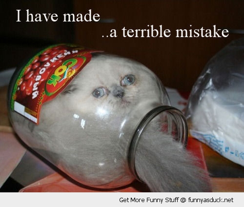Image result for lolcat mistake