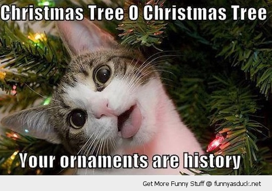 christmas tree cat lolcat ornaments history animal funny pics pictures pic picture image photo images photos lol