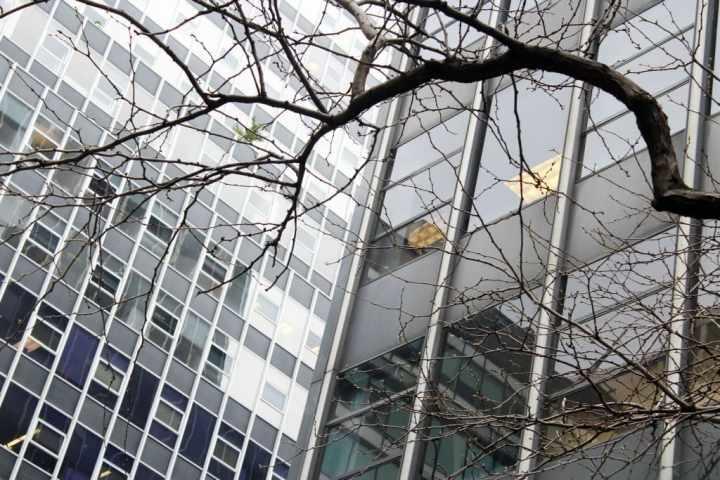 Tree in city