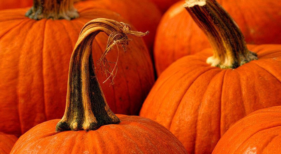 xl_6485_TP-best-of-halloween