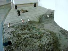 「干潟の生態系」展示3