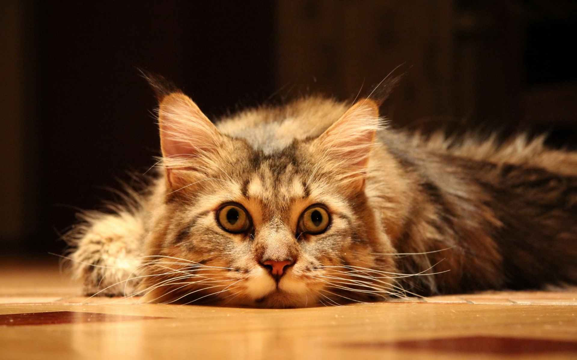 funny and cute cats 4 free hd wallpaper - funnypicture