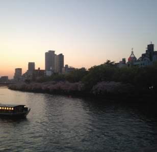 Sakura night fever