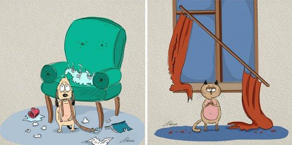 Кошки против собак: 6 основных отличий (6 фото)