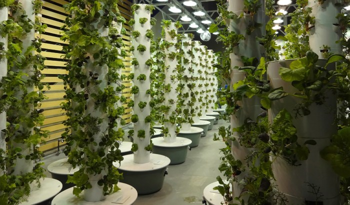 world first aeroponic garden at Chicago O'Hare International Airport (ORD)