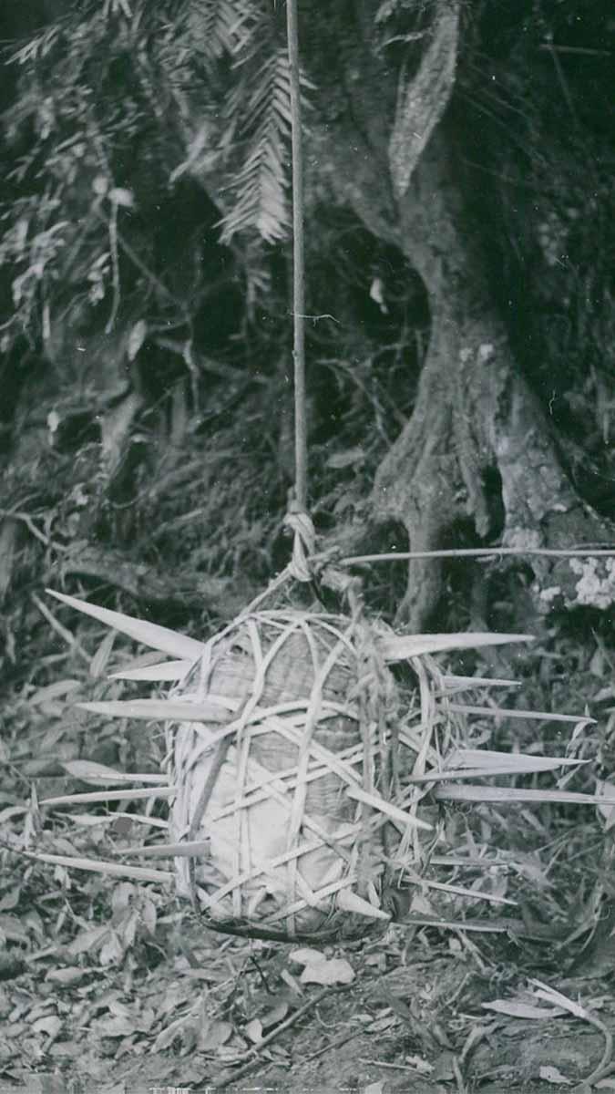 Viet cong booby traps   the Vietnam War