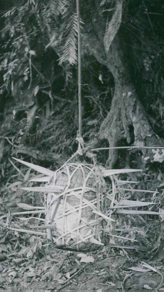 Viet cong booby traps | the Vietnam War