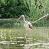 Waterpark-Barrison-small_8712769076