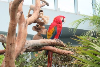 """""""Here's a Green-Winged Macaw"""""""