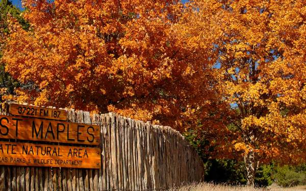 Beautiful Fall Foliage in Texas to See