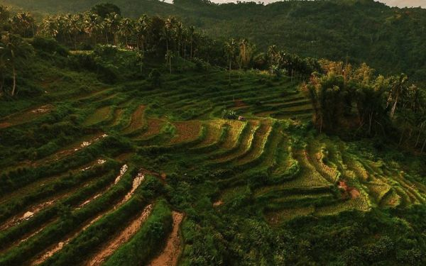 THE BUTONG RICE TERRACES